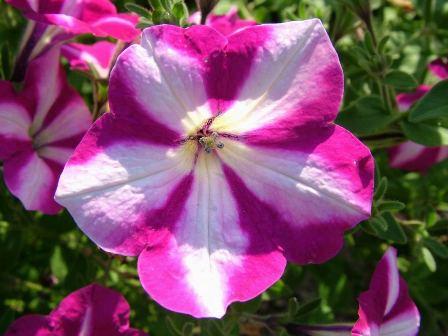 Free Flower Screensavers